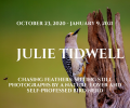 Chasing Feathers: Sitting Still Photographs by a Nature Lover and Self-Professed Bird Nerd Exhibit by Julie Tidwell